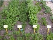 Herb-Garden3